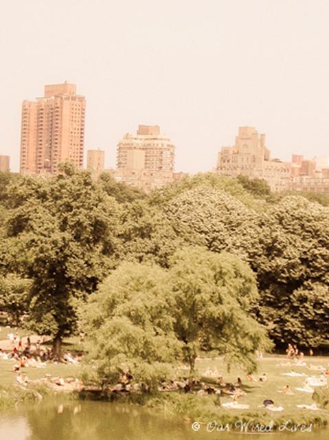 Central Park (3)-1